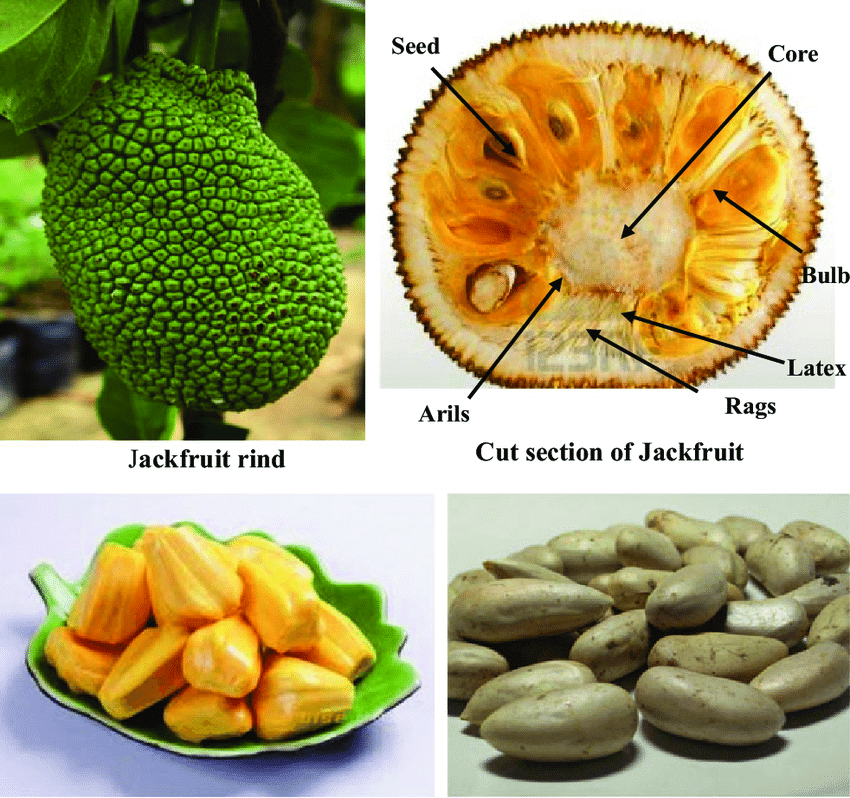Different Parts of JackFruit