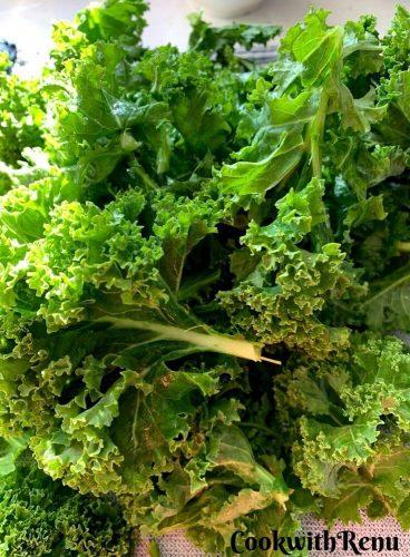 Purple Russian Kale